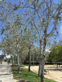 yvonnelin_60_livet_barcelona_träd